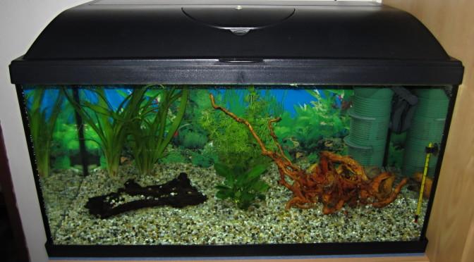 Zajeti-noveho-akvaria